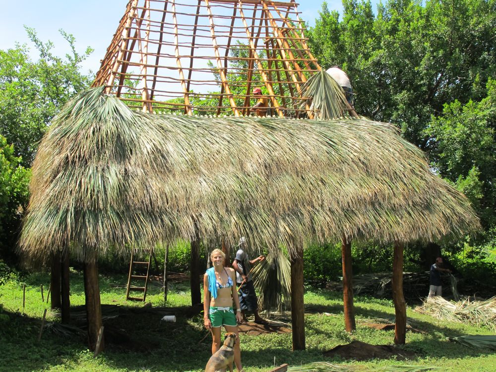 Building In Nicaragua Palm Fronds For The Thatch Roof