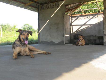 bodega dogs