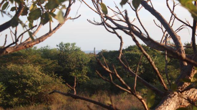 view tree lot 12 - 2